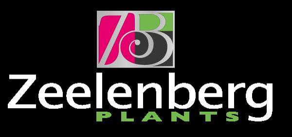 Zeelenberg Plants